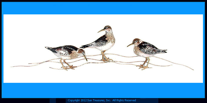 Sandpipers On Beach W326 Wall Art Bovano of Cheshire