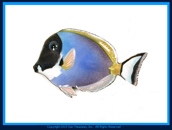 Powder-blue Surgeonfish Single W1933 Bovano Wall Sculpture
