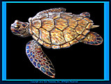 Gary Caldwell Sea Turtle Metal Wall Sculpture